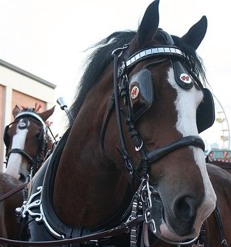 Horse Blinders